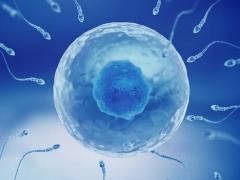 Ameliorer Votre Sperme